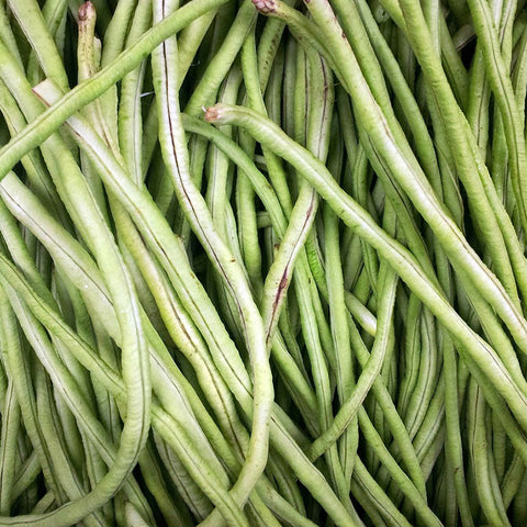Chinese Long Bean 20 #