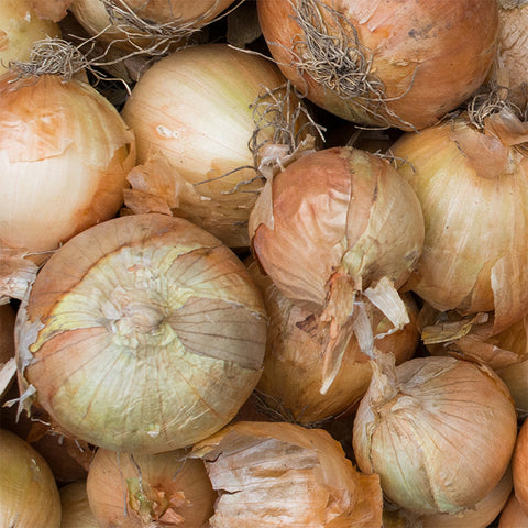 Yellow 2 lbs Onion
