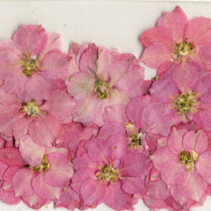 DRIED FLOWERS | Pink Larkspur Flowers