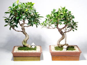 The Benefits of Bonsai Care