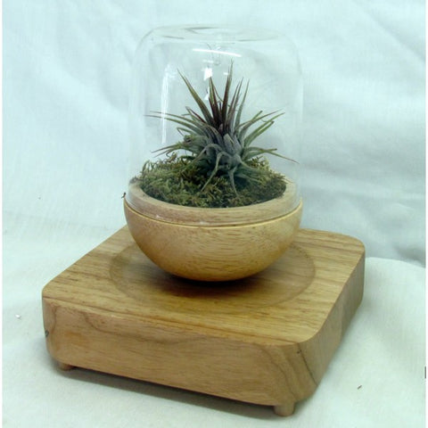GLASS COVERED LEVITATING PLANTER