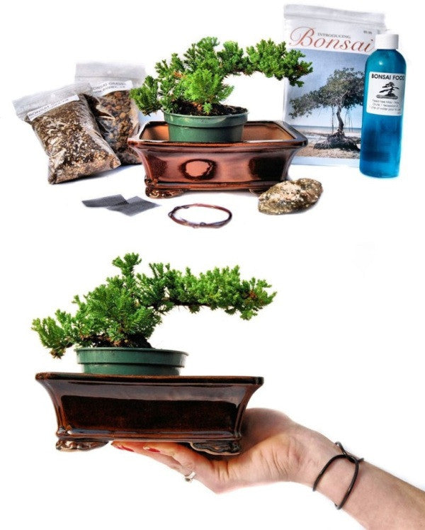 Create your first bonsai from scratch with our complete bonsai kit - available in Canada only<br>