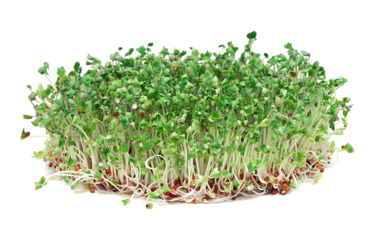 Broccoli Sprouts: a Powerful Superfood Rich in Sulforaphane