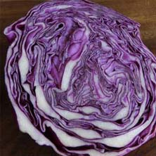 head of purple cabbage