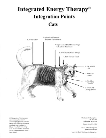 IET for Cats Poster
