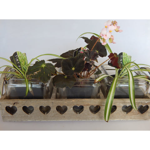 Square Glass Pots in Wooden Heart Tray