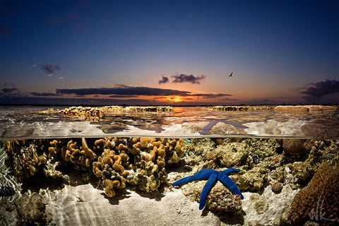 Starfish Sunrise