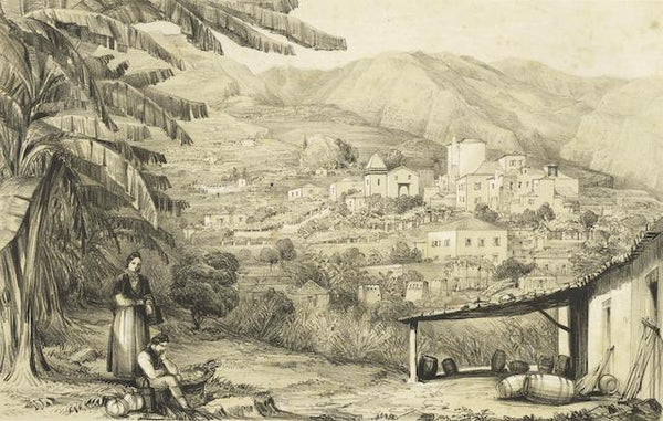 Lady Susan Vernon Harcourt - Sketches in Madeira