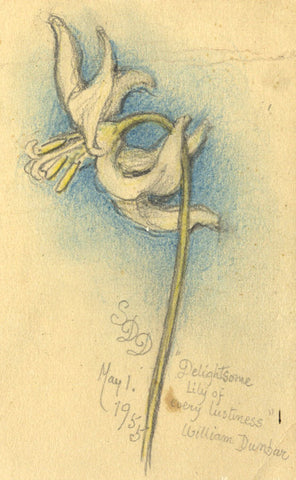 SDD, Delightsome Lily of Every Lustiness - Original 1955 graphite drawing