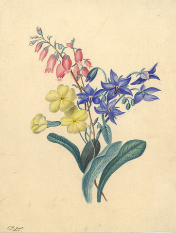 CD, Floral Study - Original 1840 watercolour painting