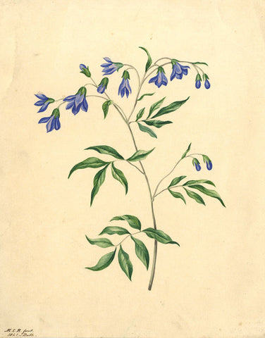Margaret Elinor Hunter, Blue Flower Study - Original 1841 watercolour painting