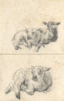 J.S. Cooper, Studies of Sheep - Original 19th-century graphite drawing