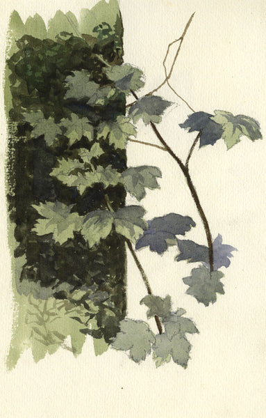 Leaves - Original mid-20th-century watercolour painting