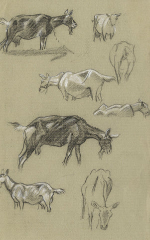 Elsie Powell, Goat Study - Original early 20th-century charcoal drawing