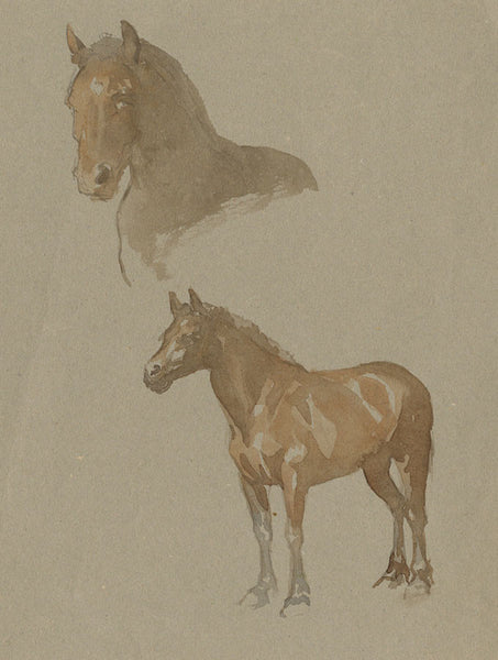 Elsie Powell, Horse Study - Original early 20th-century watercolour painting