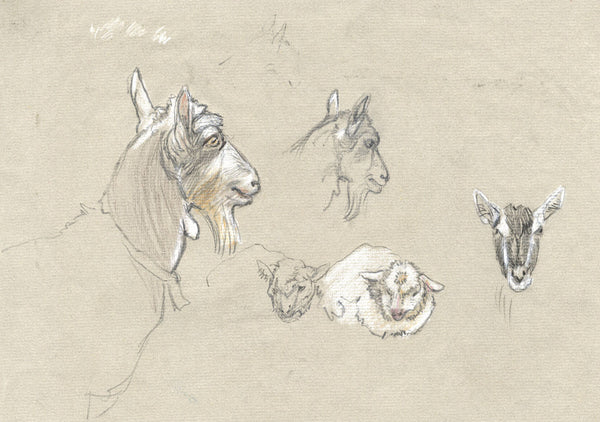 Elsie Powell, Billy Goats Study - Original early 20th-century graphite drawing