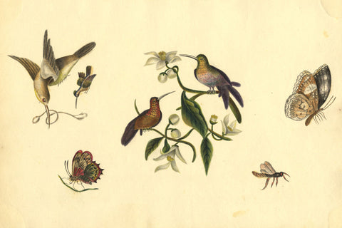 Birds and Butterflies - Original early 19th-century watercolour painting