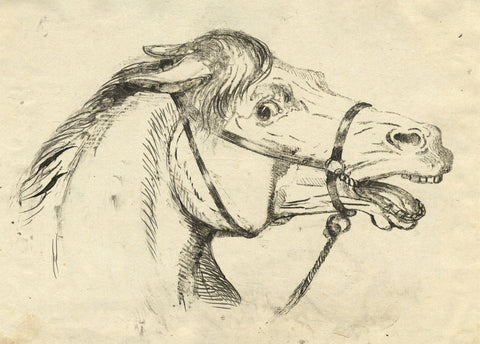 A. Hunter, Profile of Horse Head - Original early 19th-century pen & ink drawing