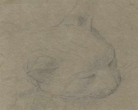 Sleeping Cat - Original early 19th-century graphite drawing
