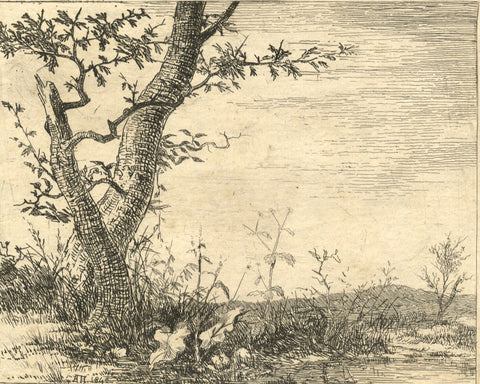 A. Hunter, Tree in Spring - Original 1840 etching print