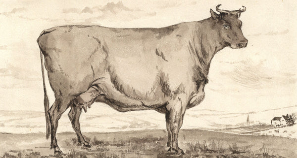 Cow with Horns - Original 19th-century watercolour painting