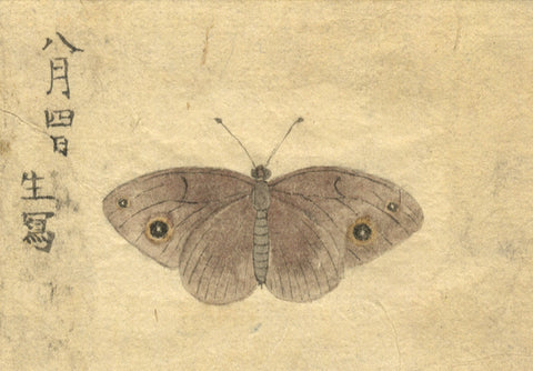Japanese Butterfly - Original 19th-century Japanese watercolour painting