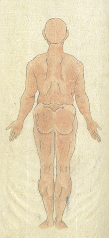 Male Anatomy Back View - Original 19th-century Japanese watercolour painting