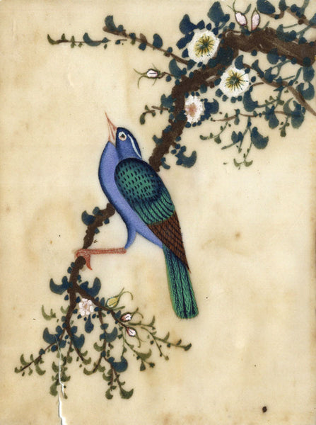 Antique 19th-century Chinese Pith Painting, Blue Bird on Blossom Branch