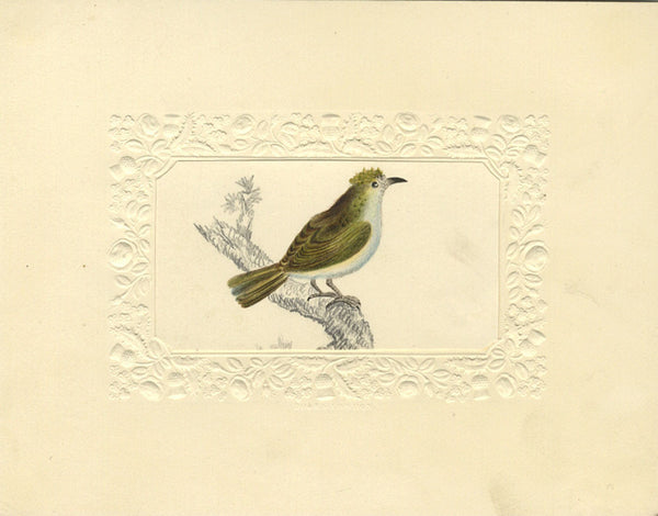 Gold Crested Bird on Branch - Original early 19th-century watercolour painting