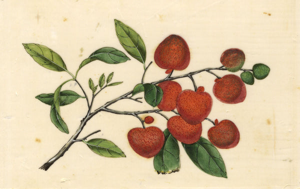 Antique 19th-century Chinese Pith Painting, Chinese Lychee Fruit Branch
