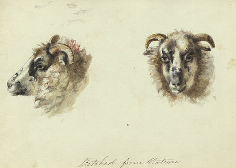 Sheep Head Studies from Nature - Original early 19th-century watercolour painting