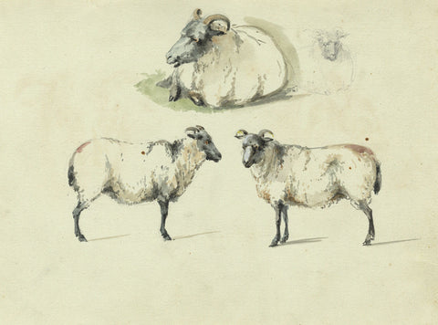 Sheep Studies - Original early 19th-century watercolour painting