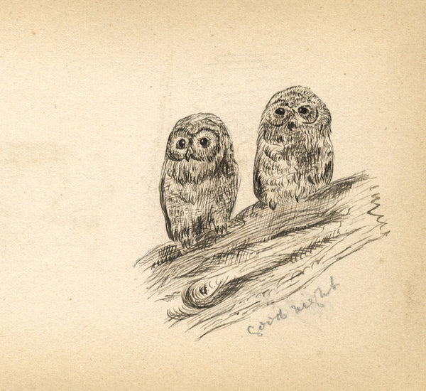 Baby Owls Study - Original 1877 pen & ink drawing
