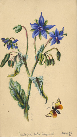 Borage Flower with Butterfly - Original 1877 watercolour painting
