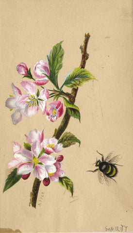 Apple Blossom with Bee - Original 1877 watercolour painting