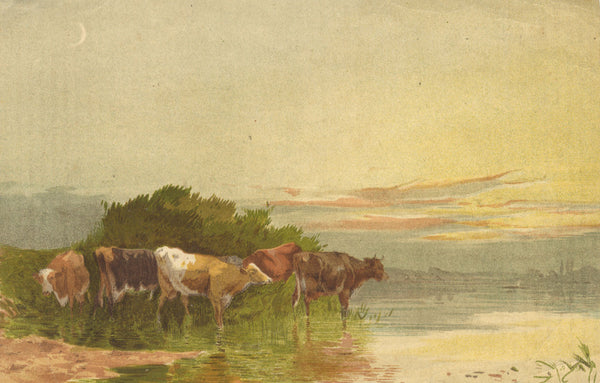Cows Drinking at River Bed - Original early 20th-century lithograph print