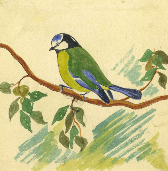 Blue Tit Bird - Original early 20th-century watercolour painting