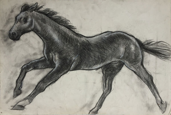Black Beauty Horse - Original mid-20th-century charcoal drawing