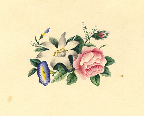 Fanny Atkinson, Floral Pink Rose Posy - Original 1845 watercolour painting