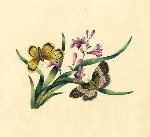 Fanny Atkinson, Pink Flowers with Butterflies - Original 1845 watercolour painting