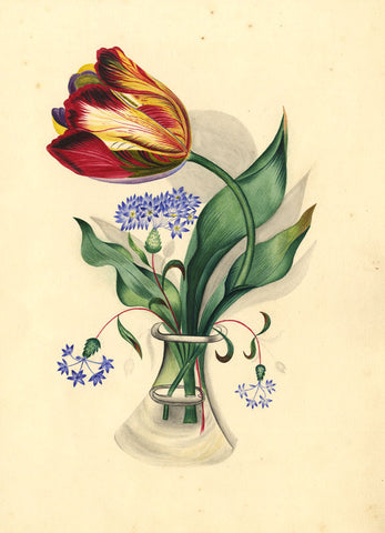 Fanny Atkinson, Tulip Flower in Vase - Original 1845 watercolour painting