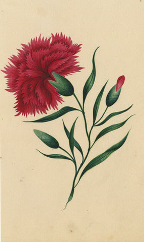 Fanny Atkinson, Red Carnation Flower - Original 1845 watercolour painting