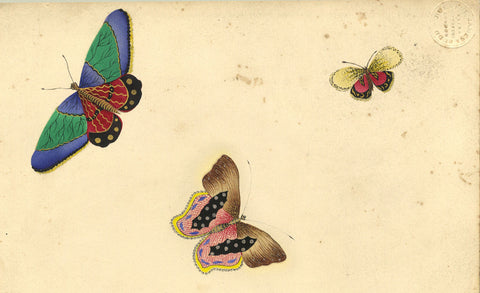 Fanny Atkinson, Trio of Butterflies - Original 1845 watercolour painting