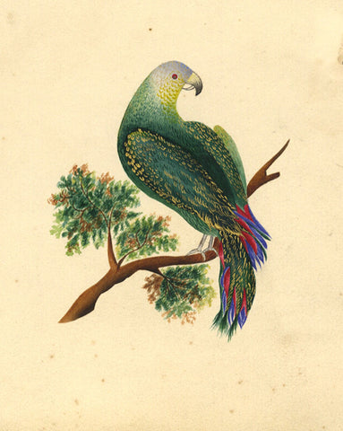 Fanny Atkinson, Parrot on a Branch - Original 1845 watercolour painting