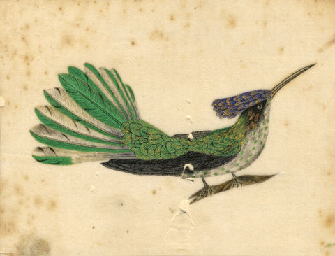 Antique 19th-century Painting on Chinese Pith, Bird of Paradise