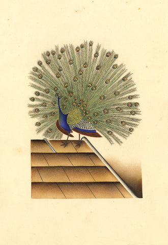 Fanny Atkinson, Peacock Bird on Roof - Original 1845 watercolour painting