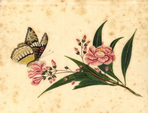 Antique 19th-century Painting on Chinese Pith, Flower & Butterfly