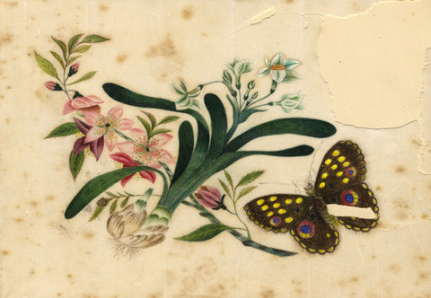 Antique 19th-century Painting on Chinese Pith, Narcissus & Butterfly