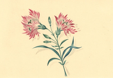 Fanny Atkinson, Carnation Flower Study - Original 1845 watercolour painting