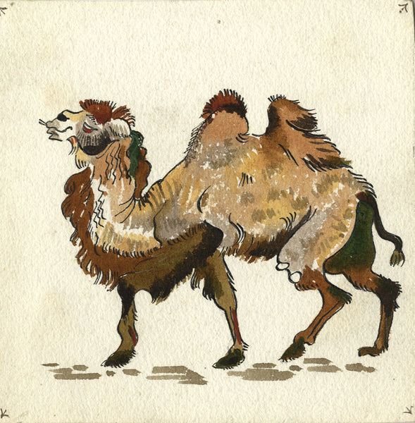Camel - Original early 20th-century watercolour painting